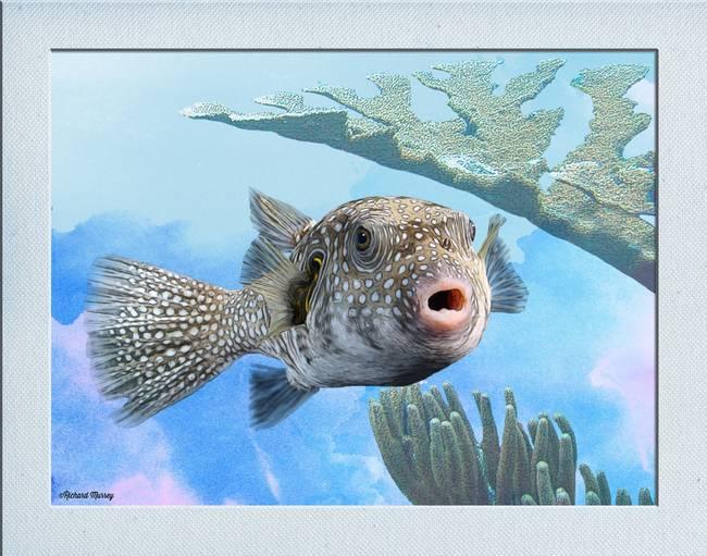 Stunning puffer artwork for sale on fine art prints for Puffer fish art