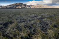 Windswept Grassy Plain, Valley of Thor