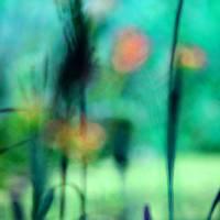 Summer Dreams Abstract by Karen Adams
