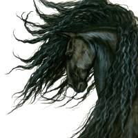 """""""DreamWalker Horse Bihrle"""" by AmyLynBihrle"""