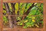 "Forest Barn Wood Picture Window Frame View by James ""BO"" Insogna"