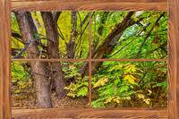 Forest Barn Wood Picture Window Frame View