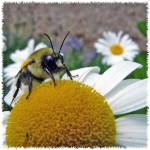 Bee and Daisy by Deanne Flouton