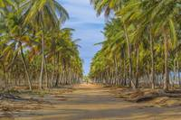 Earth Topical Road Porto Galinhas Brazil