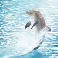 cute baby Dolphin