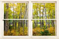 Golden Forest Rustic White Window View