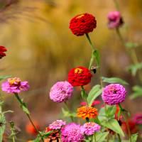 Let It Bee by Karen Adams