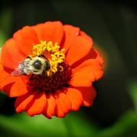 Bee Brunch by Karen Adams