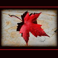 Red Maple Leaf with Red Border by Karen Adams