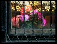 Flowers Behind Bars