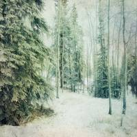 Wintry Woods
