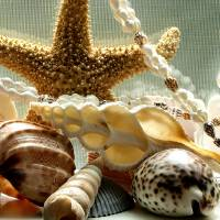 Sea Shell Macro by Richard Thomas