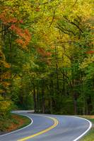 Winding Road in Fall II