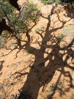 158 Pinon Shadow - Utah
