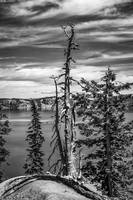 Withered tree on Crater Lake bw
