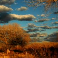 Golden Hour on the Bosque del Apazhe Art Prints & Posters by Jeannette Wood