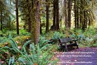 Olympic Rain Forest _1226