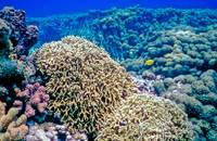 Beautiful Coral Reef
