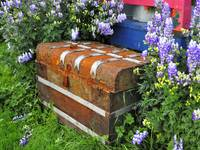 Rusted Trunk among Flowers