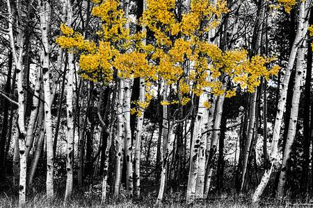 Aspen Touch of Orange