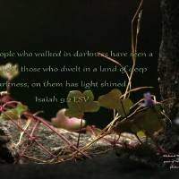 Light in a Dark Place by Richard Thomas