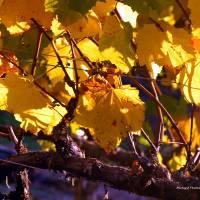 Post Harvest by Richard Thomas