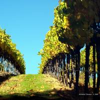 Autumn Harvest(2) by Richard Thomas