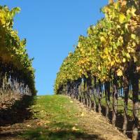 Autumn Harvest (2) by Richard Thomas