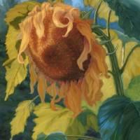 """""""Mellow Yellow"""" by soniakane"""