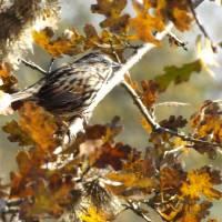 Autumn Migration by Richard Thomas