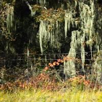 Autumn Tree Moss by Richard Thomas