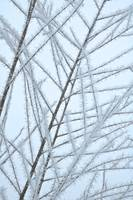 Frosty Natural Patterns by Carol Groenen