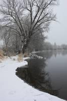 Winter Tree Reflection by Carol Groenen