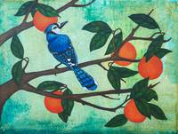 Blue Jay on Orange Tree