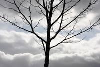 One Winter Tree by Carol Groenen