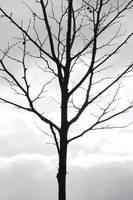 Lone Winter Tree by Carol Groenen