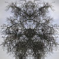 Tree Transformed Art Prints & Posters by Todd VanCantfort