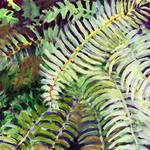 Cascadia Study No 1 by Jennifer Lommers
