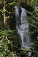 Waterfall in the Rainforest by Carol Groenen