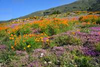 Beautiful Wildflowers Along PCH