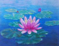 pink water lily 2