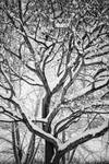 "Snowy Winter Intertwine by James ""BO"" Insogna"