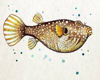 PufferFish in Watercolor
