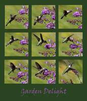 Hummingbird Garden Delight Green