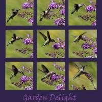 Hummingbird Garden Delight Purple by Karen Adams
