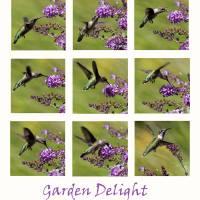 Hummingbird Garden Delight by Karen Adams