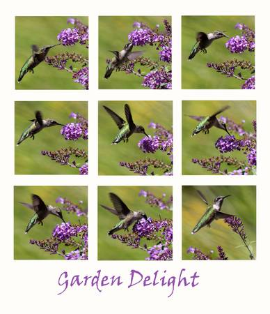 Hummingbird Garden Delight