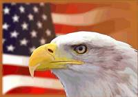 USA Flag Eagle