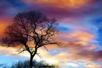 Sunset Tree Landscape Wall Art Print