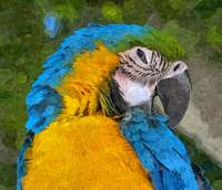 Blue Yellow Parrot